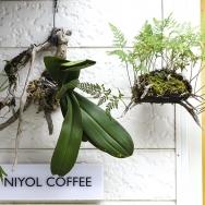 世界の花とコーヒー