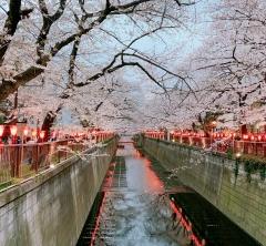 【コマブロ Vol.21】桜の季節の魅力