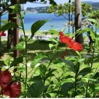 沖縄の旅、満喫してきました🌴🌺✈