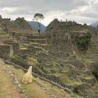 ペルー旅行(マチュピチュ)