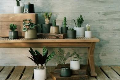 心地よい暮らしを叶えるKINTO初の植物コレクション