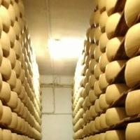 ワイナリー巡りとイタリアチーズの代表パルメジャーノ作りを見学