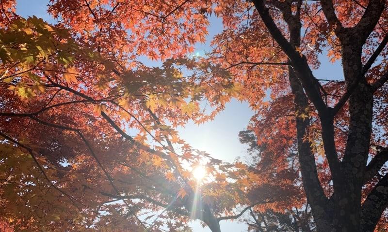 秋田で紅葉狩りして温泉につかる…大人が愉しい一人旅
