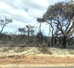 オーストラリア森林火災について