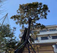 パワースポット「龍」の宿る木