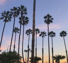 LAの新型コロナウィルスの影響