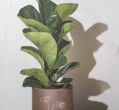 植物からもらうエネルギー