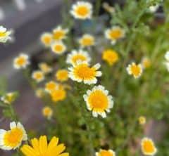可憐な黄色いお花の正体は・・・?