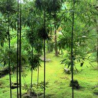 【加賀百万石発】この時期こその苔の美を堪能 苔の里 石川県小松市