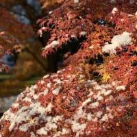 【京都】秋と冬のコラボレーション