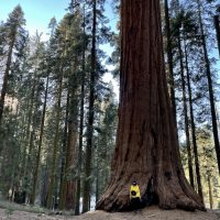 【南カリフォルニアより】セコイア&キングスキャニオン国立公園の地上最大の生物とは?!