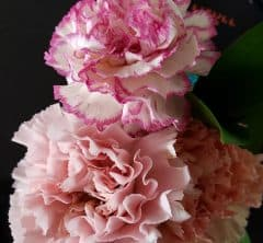 """今年は特別な気持ちとともに贈りたいから、""""花の定期便""""による「母の日ギフト」を取り寄せてみた!"""