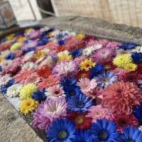 〈三重〉叶いの宮、金井神社の花手水💠