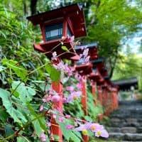 【京都発】叡山電車に乗って紅葉シーズンが楽しみになる貴船神社へ♪